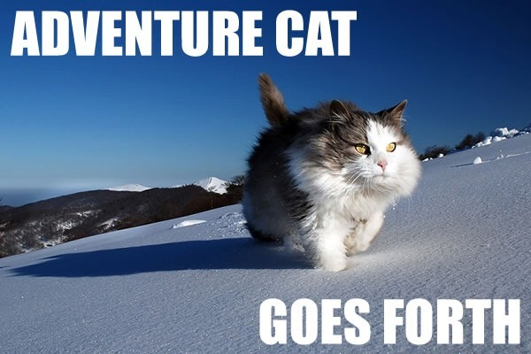 Yeah!  Adventure Cat!  Do it!
