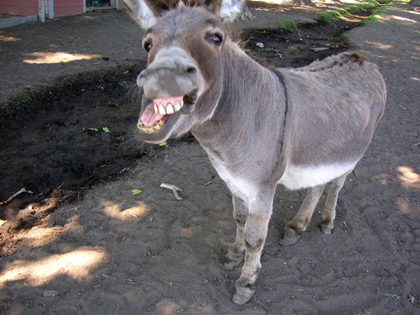 http://meganandtimmy.com/wp-content/uploads/2012/07/donkey.jpg
